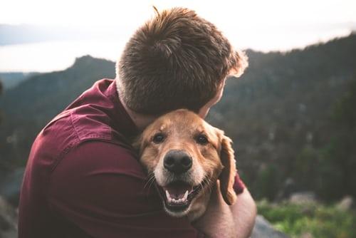 Wat moet je overwegen voor je een hond neemt?